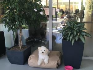 Mažas šuniukas ilsisi IV ofise