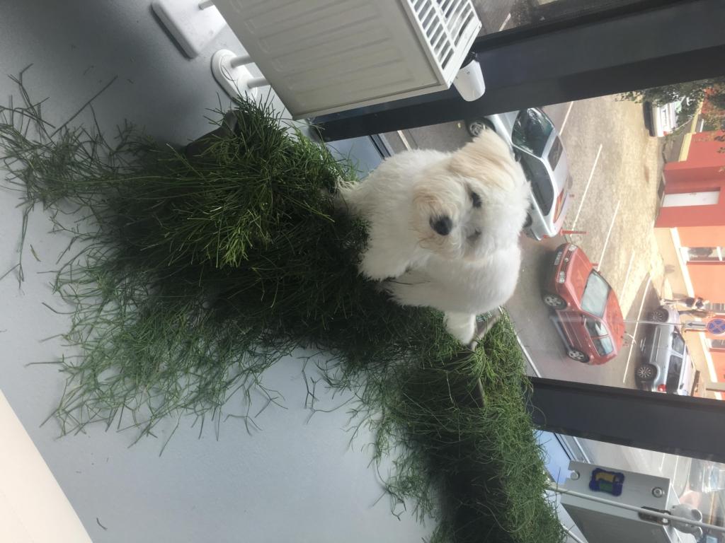 Šuo ant gėlių vazono